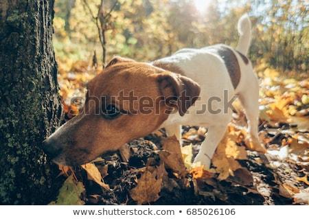 man · lopen · hond · straat · poseren · camera - stockfoto © ivonnewierink