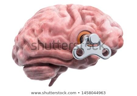 Agy kulcs emberi agy irányítás automatizálás robotikus Stock fotó © adrian_n