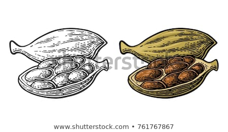 Chinese black cardamom Stock photo © Coffeechocolates