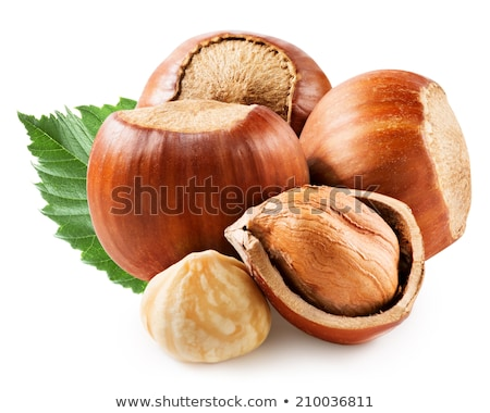 hazelnut or filbert nut isolated on white background cutout  Stock photo © natika