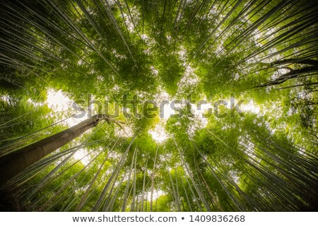 見 · 竹 · 森林 · 日本 · 表示 · 家 - ストックフォト © armin_burkhardt