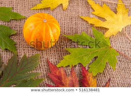 Egy citromsárga juharlevél zsákvászon ősz színes Stock fotó © olandsfokus