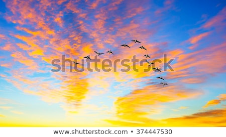 Photo stock: Vue · sauvage · oies · banque · lac