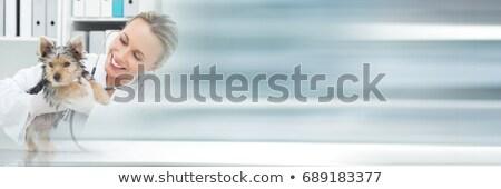 állatorvos · kis · kutya · izolált · fehér · kéz · orvos - stock fotó © fantazista
