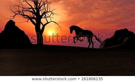 Paard lopen zonsondergang woestijn illustratie natuur Stockfoto © ankarb