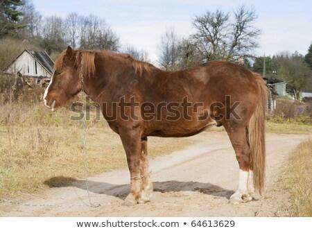 Alten krank Pferd Fuß ländlichen Straße Stock foto © vavlt