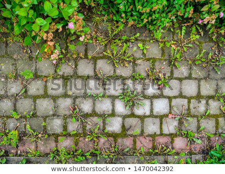 Concrete Pavement Laid as Gray Small Square. Stock photo © tashatuvango
