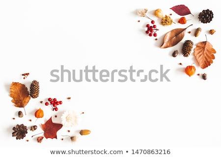 rowan leaves background stock photo © valeriy