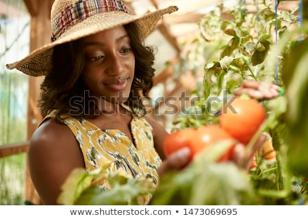 oogst · tijd · vers · appels · mand · voedsel - stockfoto © lightsource