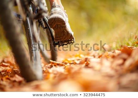 close up of a bicycle wheel with details stock photo © ziprashantzi