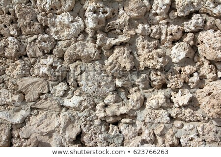 wall of weird fossilized seashells and corals Stock photo © Mikko