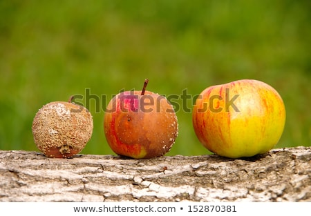 apple - good bad ugly Stock photo © tdoes