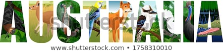 Laughing Kookaburra Stock photo © bluering