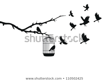 Canary bird silhouettes Stock photo © sifis