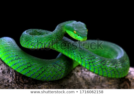 serpente · isolado · cobra · branco · verde · réptil - foto stock © bluering