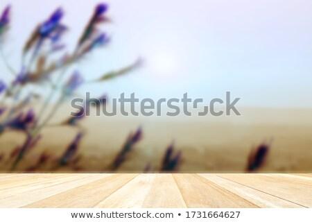 Bleu intérieur lumière chambre espace de copie design Photo stock © IMaster