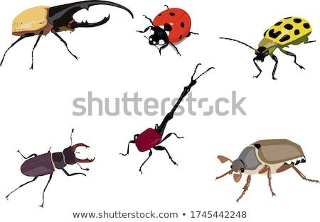 Különböző bogarak kert illusztráció virágok természet Stock fotó © bluering