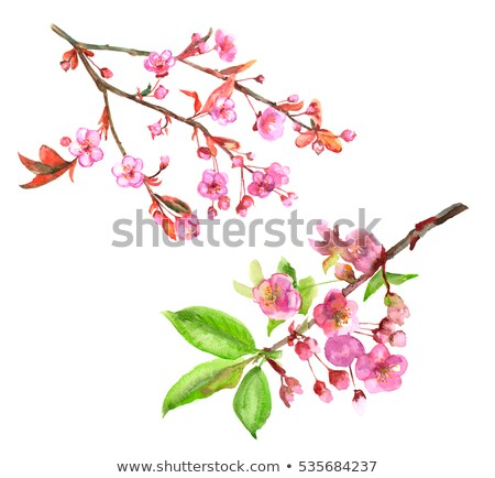 Almond Branch on Bloom Stock photo © Dreamframer