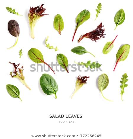 eszik · zöld · levelek · közelkép · lövés · növény - stock fotó © maryvalery
