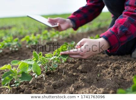 Közelkép női gazda kéz megvizsgál szójabab Stock fotó © stevanovicigor
