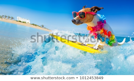 Drôle animaux surf plage cartoon heureux Photo stock © aminmario11