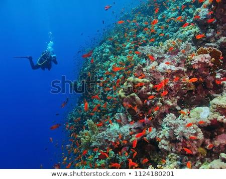 Omán piros kilátás régió 3d illusztráció rendkívül Stock fotó © Harlekino