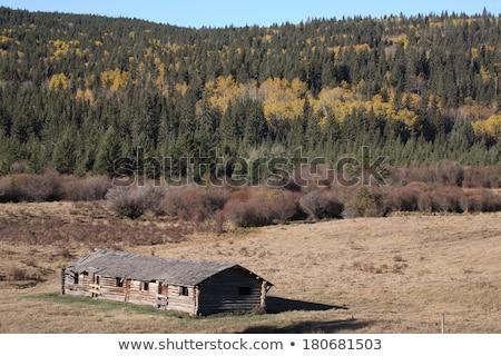 Old abandoned Saskatchewan farm buidlings Stock photo © pictureguy