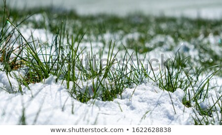 Neige herbe texture glace espace Photo stock © clarion450