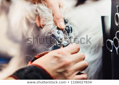 scissors dog's nail clutches clipper tool  Stock photo © OleksandrO