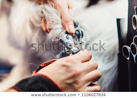 ножницы собаки ногтя инструментом изолированный белый Сток-фото © OleksandrO