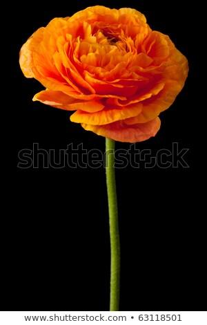 rózsaszín · fehér · virágok · kopott · üres · papír · jegyzet - stock fotó © dashapetrenko
