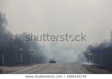 Ognia cartoon wildfire wyschnięcia Zdjęcia stock © blamb