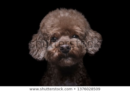 Portre kaniş ağız dil evcil hayvan kürk Stok fotoğraf © IS2