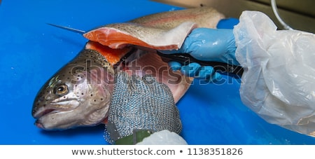 Stock photo: Cutting trout fillets on a fish farm, France