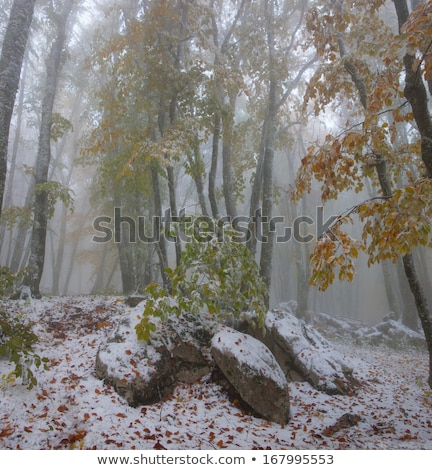 eerste · winter · sneeuw · berg · bos · rand - stockfoto © wildman