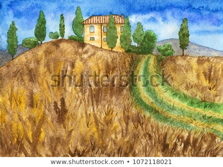 Cypress trees and meadow with typical tuscan house. Stock photo © asturianu