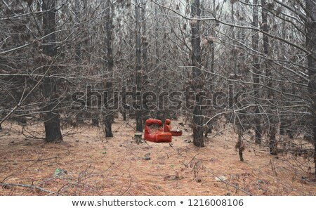 Abandoned red chair in the wintry pine forest Stock photo © lovleah