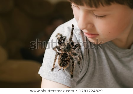 A Tarantula spider Stock photo © colematt
