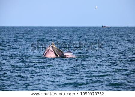 Küçük tekne yüzme üzerinde örnek su Stok fotoğraf © adrenalina
