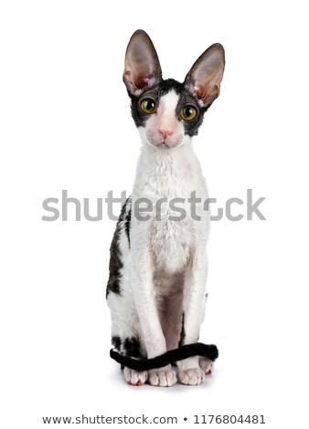 preto · gato · surpreendente · gatinho · menina · em · pé - foto stock © CatchyImages