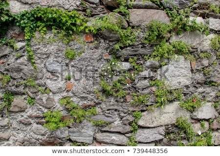 Old Stone Wall With Flowers Background Texture Stock photo © feverpitch