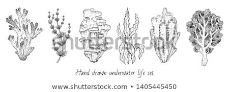 Dekoracyjny wodorost koral atramentu gryzmolić wektora Zdjęcia stock © pikepicture