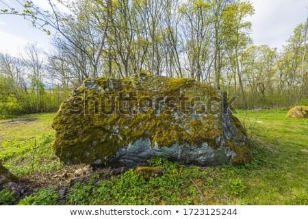 Ogromny kamień lasu naturalnie pokryty zielone Zdjęcia stock © X-etra