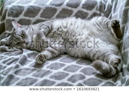 Fiatal nő macska alszik együtt szabadtér fa asztal Stock fotó © Giulio_Fornasar