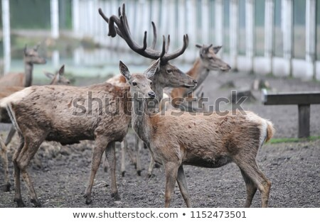 Natural Park Created for Deers to Live, Forest Stock photo © robuart