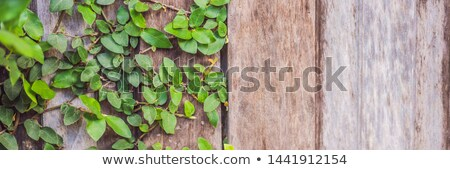 Texture of the old wooden fence and lash plants BANNER, LONG FORMAT Stock photo © galitskaya