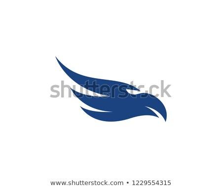 Falcão Águia pássaro logotipo preto cor Foto stock © krustovin