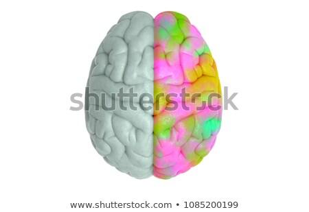 Creative haut vue côté cerveau Photo stock © evgeny89