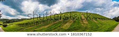Domboldal szőlőskert völgy falu Kalifornia hegyek Stock fotó © disorderly