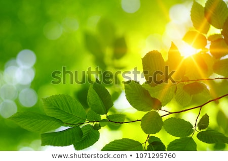 Sun With Leafs Stock photo © adamson